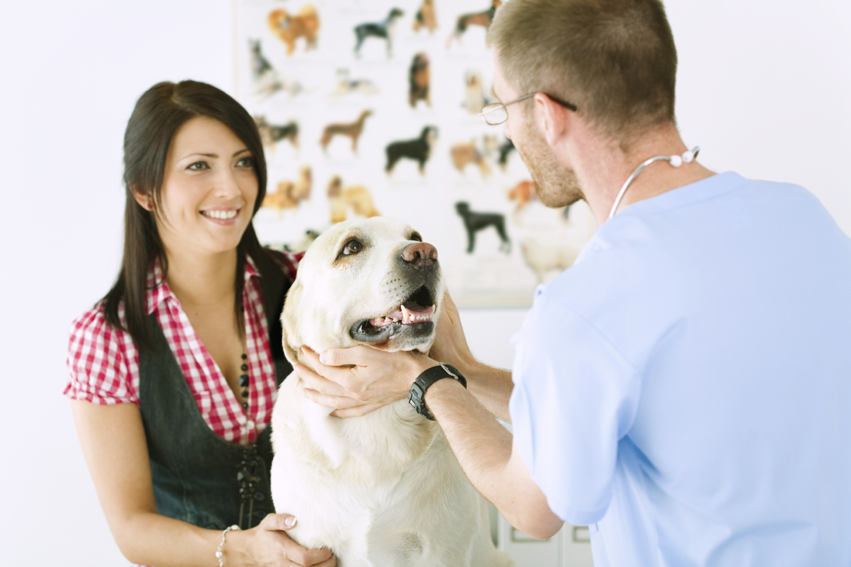 Pet-Friendly Guide for Finding a Good Vet Clinic